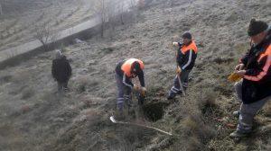 Sungurlu Belediyesi Park ve Bahçeler Müdürlüğüne bağlı ekipler, daha yeşil bir Sungurlu için çalışmalarına devam ediyor. | Sungurlu Haber
