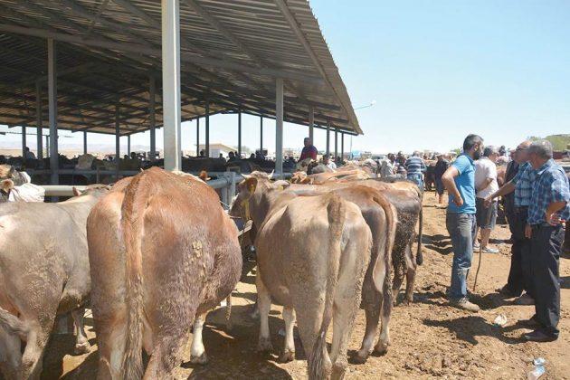Kurban bayramına sayılı günler kala kurbanlıklar pazarlara inmeye başladı. Sungurlu ilçesinde yaklaşan kurban bayramı nedeniyle ilçede kurulan hayvan pazarında hareketlilik başladı.   Sungurlu Haber