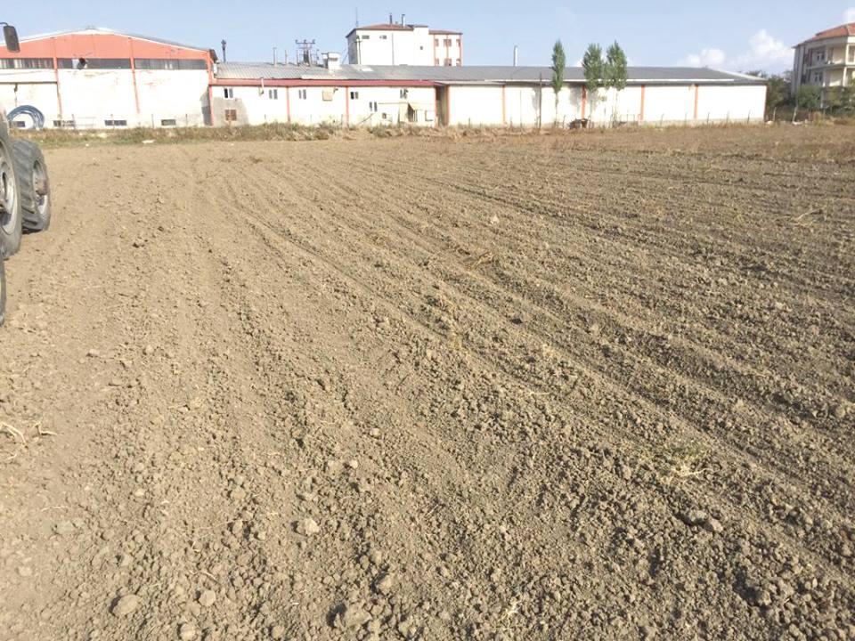 Bozkır Ekosistemlerinde iklim değişikliğine Ekosistem tabanlı uyum için tarımsal uygulamalar proje kapmasında Sungurlu'da 17 dekarlık bir alana anıza direkt ekim yapıldı. | Sungurlu Haber