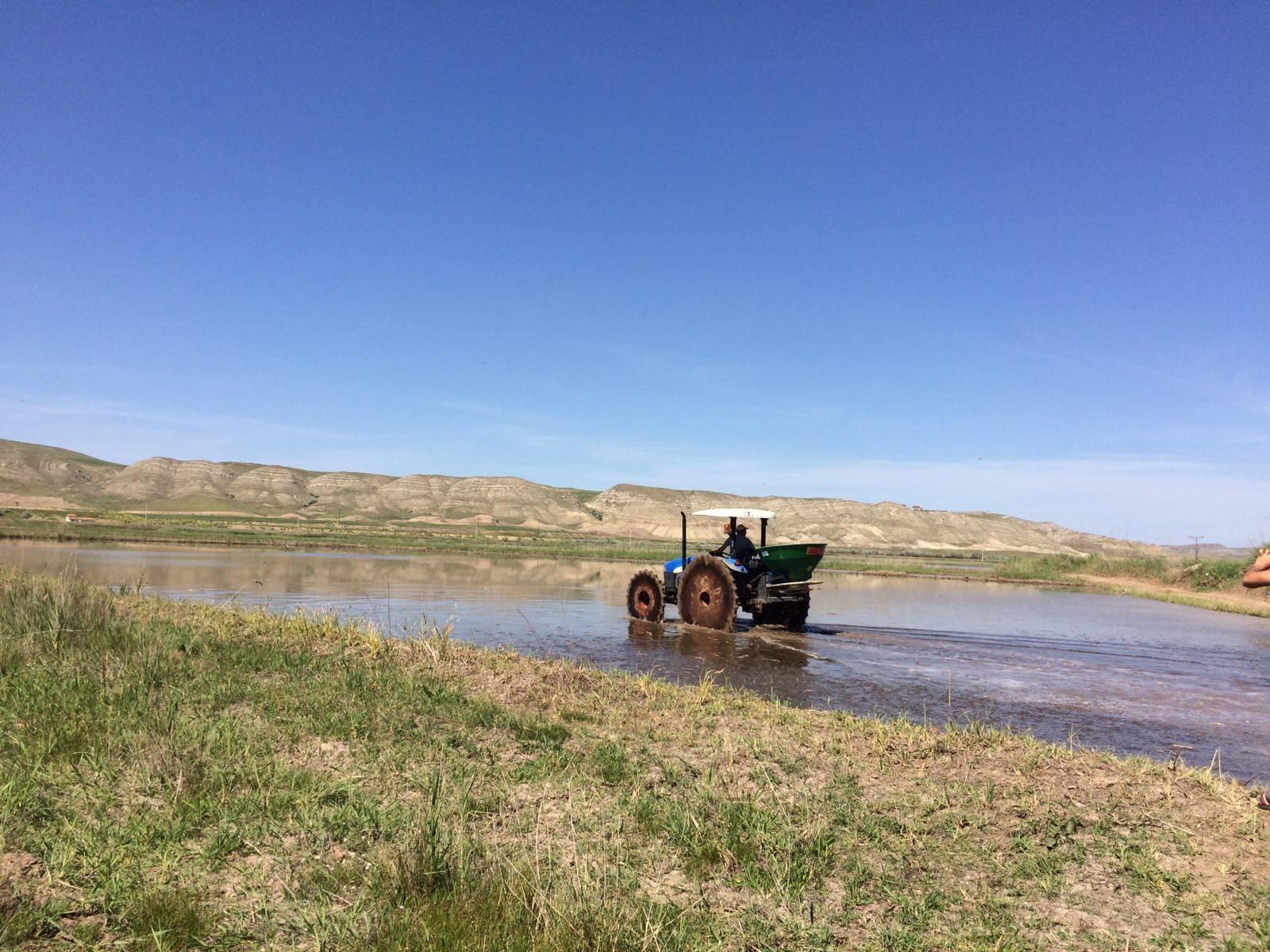 İlçede çeltik ekilen tek köy olan Kula köyünde, çiftçiler ekime başladı. Tarlalarını özenle hazırlayarak su salınımını yapan çiftçiler, çeltik tohumlarını toprakla buluşturdu. | Sungurlu Haber