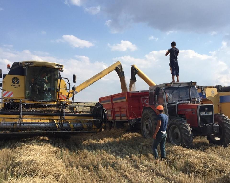 İlçeye bağlı Kula Köyü'nde kendi biçerdöveri ile 500 dönüm arazisini biçen Aytekin Altuntaş isimli çiftçi, ilk arpa hasadını yaptı. | Sungurlu Haber