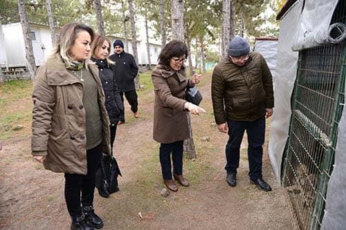 Sungurlu Belediyesi ilçeye kuracağı hayvan bakımevi için Çorum'da teknik incelemelerde bulundu.   Sungurlu Haber