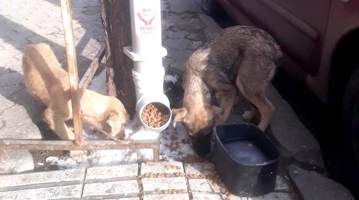 Yeniden Refah Partisi Sungurlu İlçe teşkilatı, ilçede örnek bir proje başlattı. 'Bir Avuç Yemde Senden' adı verilen proje ile sokak hayvanlarının karınlarını doyurmalarına yardımcı oluyorlar. | Sungurlu Haber