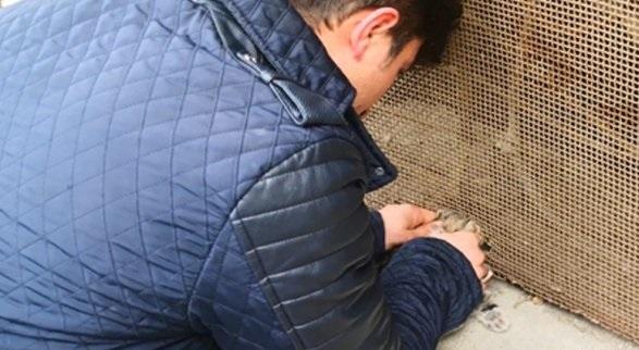 Sungurlu'da köpekten kaçan yavru kedinin kafası önce su borusuna sıkıştı. Vatandaşlar tarafından borudan çıkartılan kedi daha sonra tel örgüye sıkıştı. | Sungurlu Haber