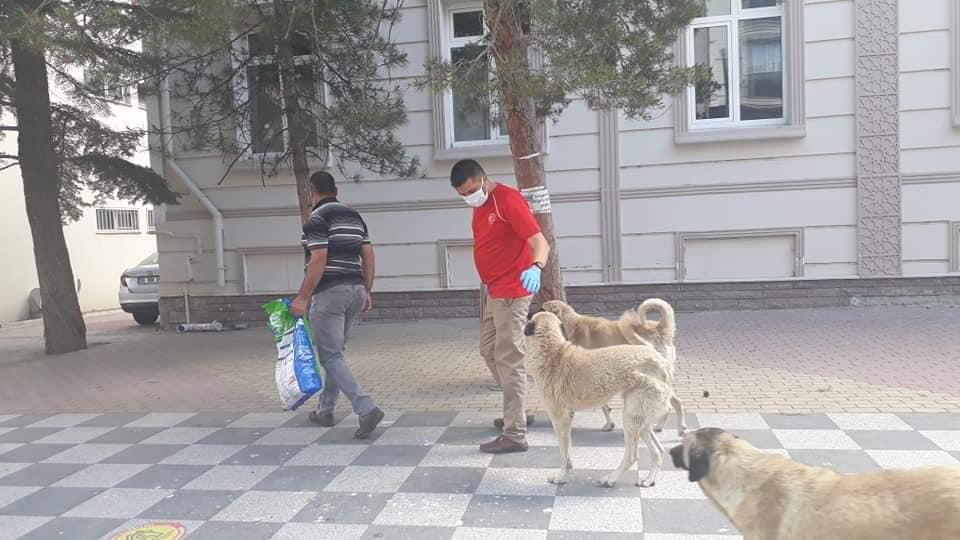 Tüm yurtta olduğu gibi Sungurlu'da da Ramazan Bayramının 1. günü sokağa çıkma kısıtlaması dolayısıyla yiyecek bulmakta zorlanacak sokak hayvanları beslendi.Korana virüs ile mücadele tedbirleri kapsamında 4 gün boyunca tüm yurtta sokağa çıkma kısıtlaması uygulanıyor.Sungurlu Gençlik Merkezi, bugün ilçe merkezinde yiyecek bulmakta zorlanan sokak hayvanlarını besledi. | Sungurlu Haber