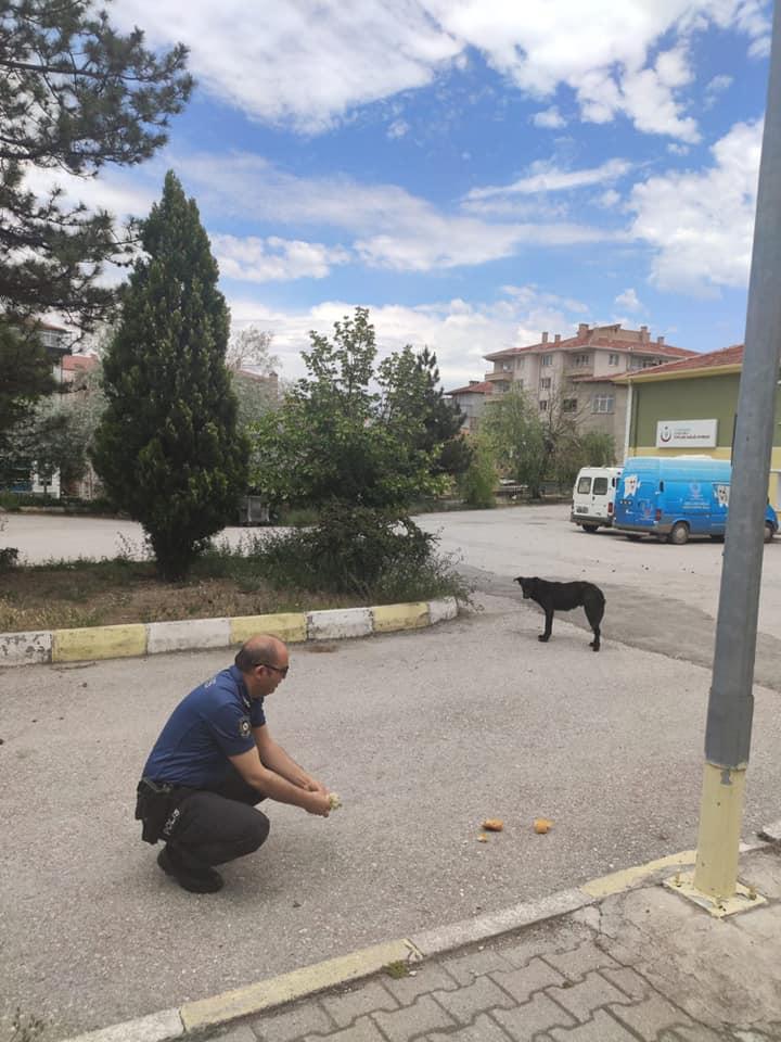 Korana virüs ile mücadele tedbirleri kapsamında 4 gün boyunca tüm yurtta sokağa çıkma kısıtlaması uygulanıyor.Sungurlu İlçe Emniyet Müdürlüğüne bağlı ekipler, bugün ilçe merkezinde yiyecek bulmakta zorlanan sokak hayvanlarını besledi. | Sungurlu Haber