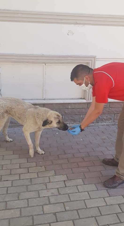 Sungurlu'da Sokak Hayvanları Beslendi   Sungurlu Haber