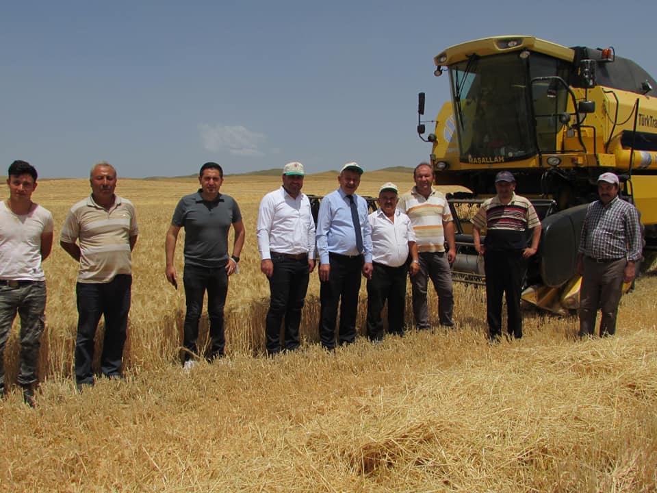 İl Tarım ve Orman Müdürü Orhan Sarı Sungurlu'da biçerdöverle arpa hasadını yerinde inceledi. | Sungurlu Haber