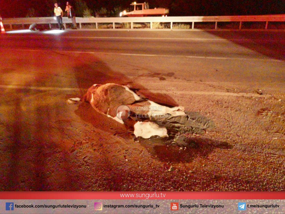 Sungurlu'da meydana gelen kazada 2 büyükbaş hayvan telef olurken, kazaya karışan araç sürücüsü bulunamadı. | Sungurlu Haber