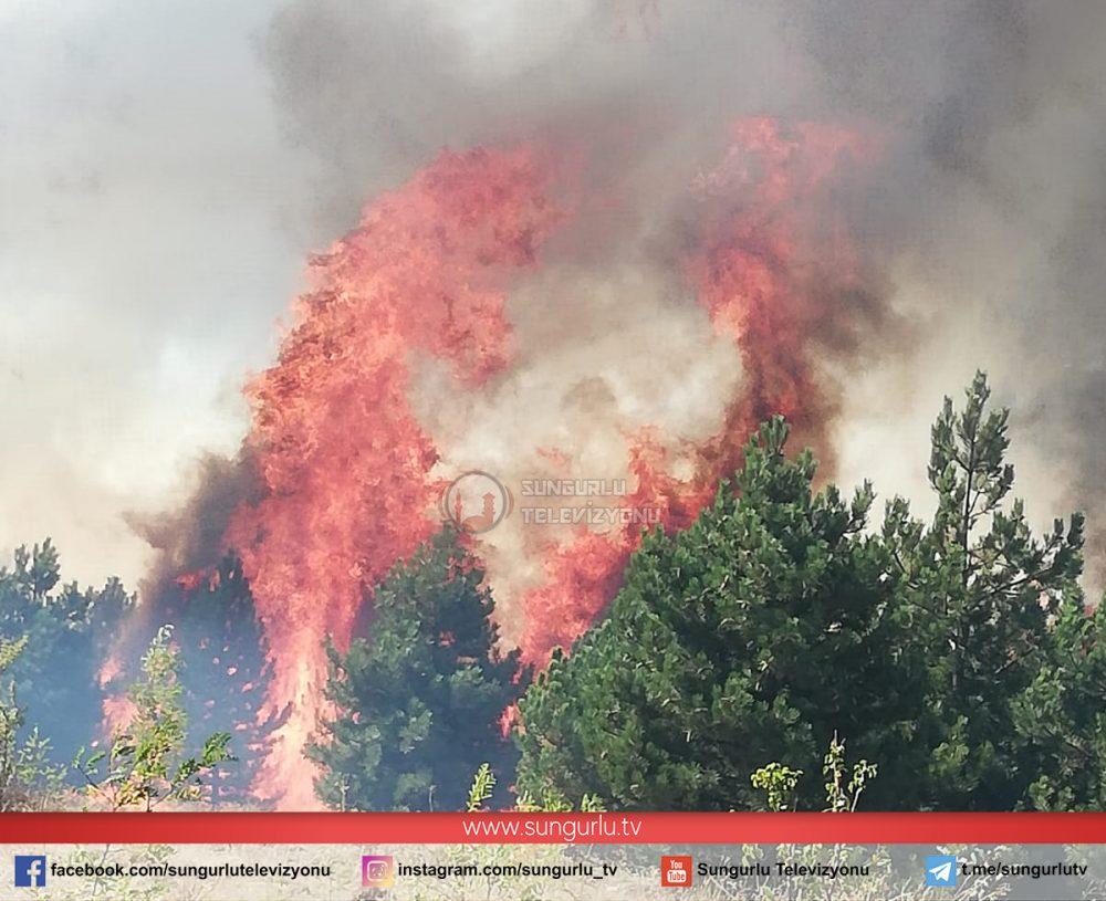 Sungurlu'da Orman Yangını » orman yangını, sungurlu, sungurlu haber, sungurlu yangın, yangın