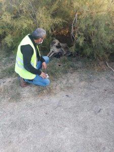 Sungurlu Belediye Başkanlığı, sokak hayvanlarına yönelik çalışmaları devam ediyor. | Sungurlu Haber