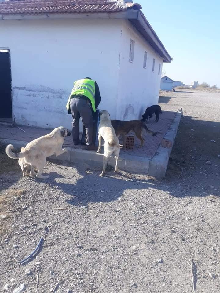 sokak hayvanları sungurlu belediyesi sungurlu haber