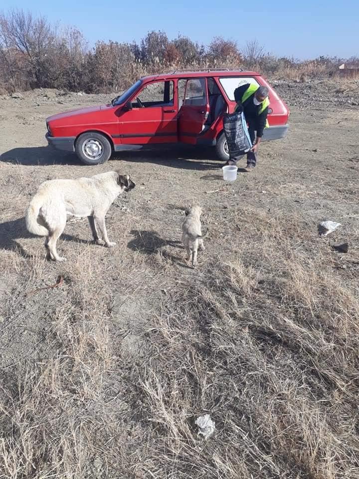 Koronavirüs tedbirleri kapsamında sokağa çıkma yasağı getirilmesiyle Sungurlu Belediye ekipleri sokak hayvanlarını besledi. | Sungurlu Haber