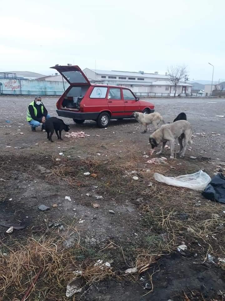 Sungurlu Belediyesi Mobil Kısırlaştırma Sevgi Veterinerlik Hizmetleri Limited Şirketi veteriner hekim ve veteriner sağlık teknikerleri denetiminde Sungurlu'da bulunan sokak köpeklerine kısırlaştırma işlemleri yapıldı. Ayrıca kısırlaştırılan sokak hayvanlarına kuduz,iç ve dış parazit aşıları da tamamlandı. | Sungurlu Haber