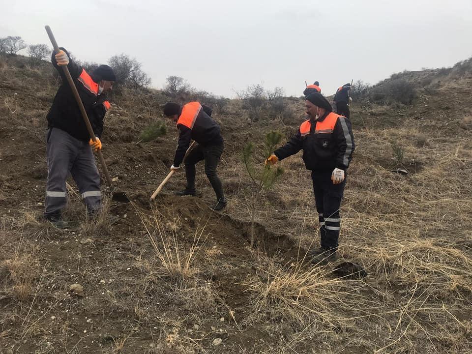 Sungurlu Belediye Başkanlığı, ağaçlandırma seferberliği başlatarak ilçenin çeşitli noktalarına 10 bin adet fidan dikiyor. | Sungurlu Haber