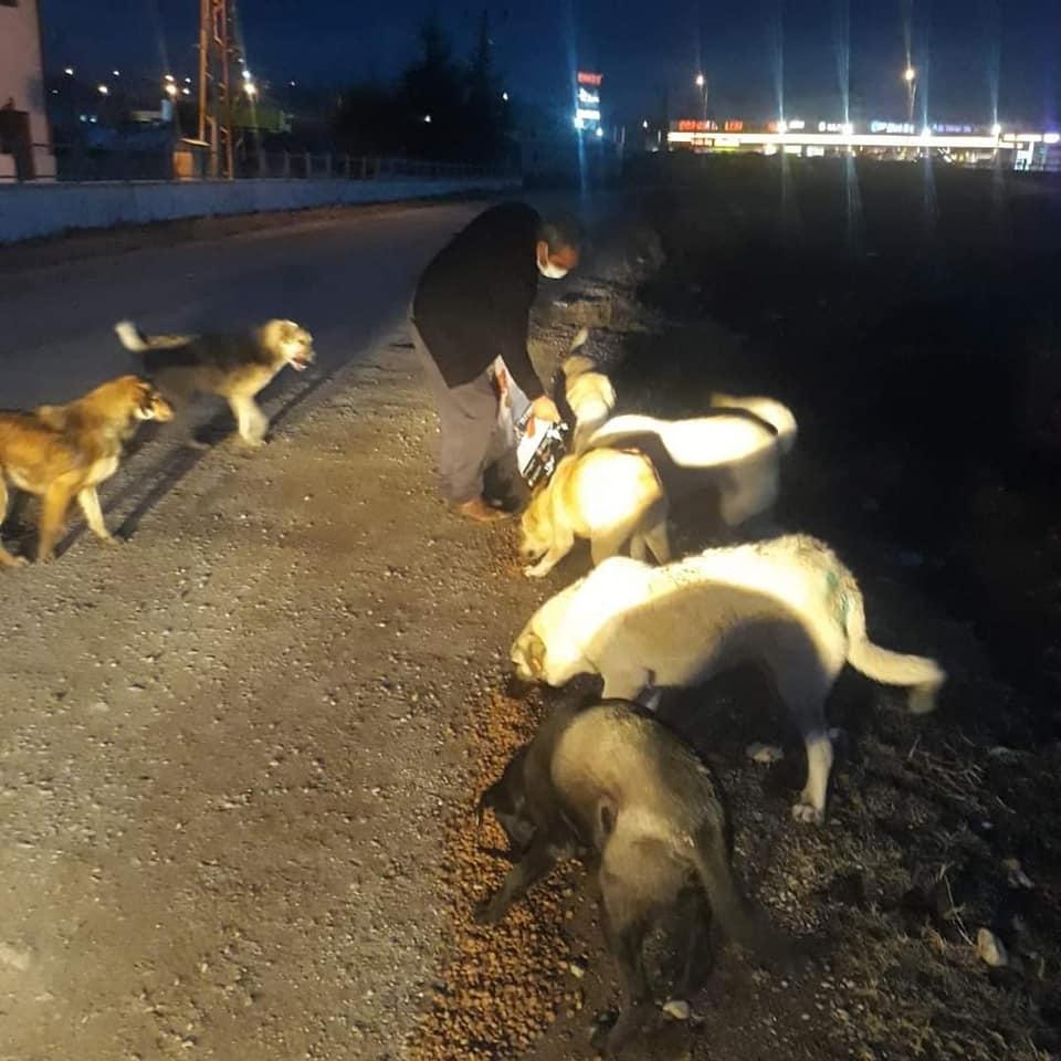 Belediye Başkanlığı tarafından, sokak hayvanlarının özellikle soğuk havalarda aç kalmaması için düzenli olarak yapılan besleme çalışmalarımız devam ediyor. Dün akşam geç saatlerde ilçemizin belirli noktalarına bırakılan gıda ürünleri ve mamalar ile sokak hayvanları beslenirken, araba çarpan bir köpek de ekipler tarafından alınarak tedavisi için Çorum Belediyesi Veteriner İşleri Müdürlüğüne götürüldü. | Sungurlu Haber