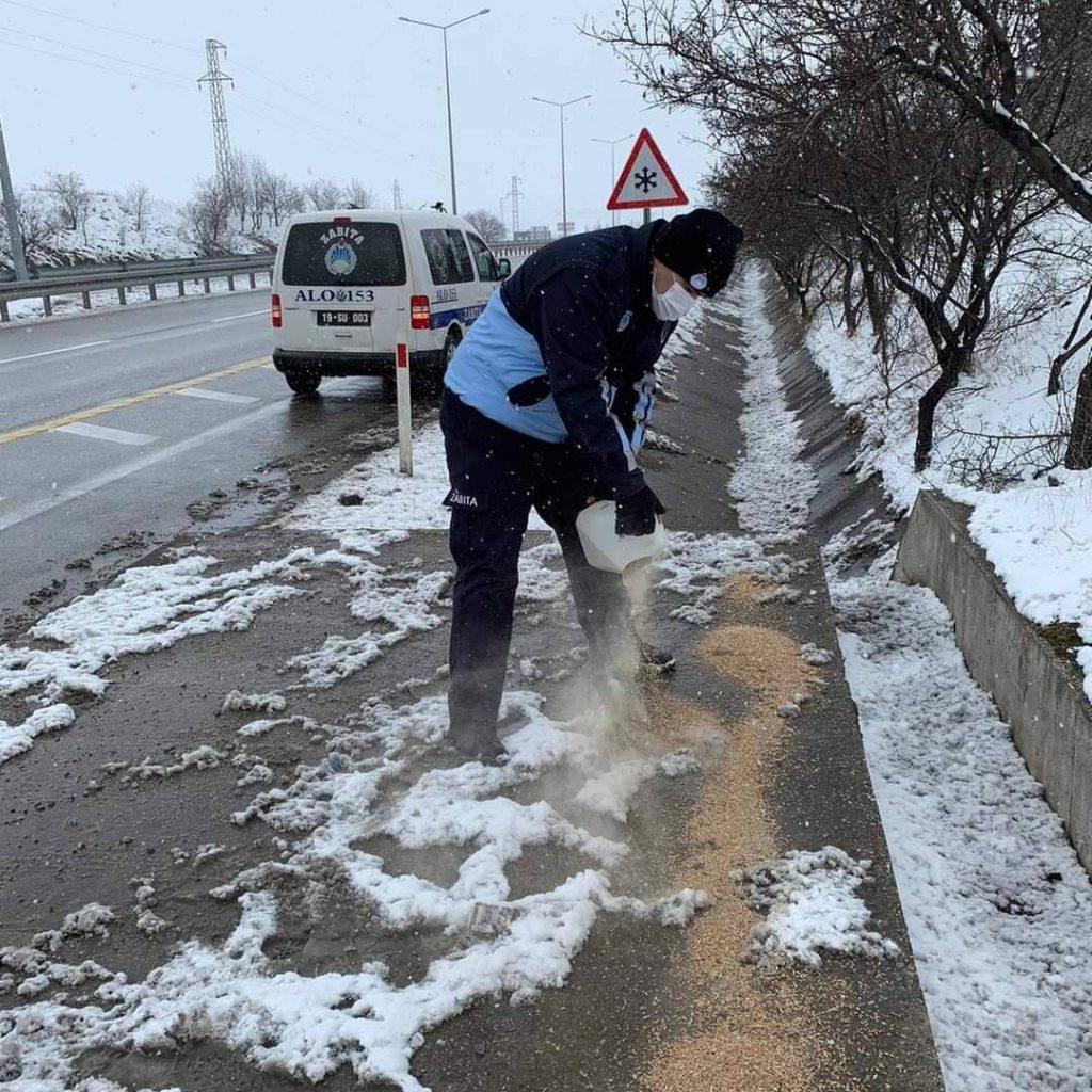 Sungurlu Belediyesi Zabıta Müdürlüğü ekipleri kar yağışının başlamasıyla birlikte muhtelif yerlere yem bıraktı. | Sungurlu Haber