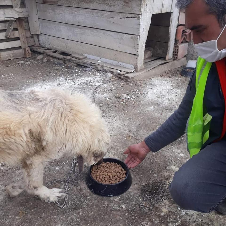Ankara'da ikamet eden genç hemşerimiz Yalçın Berk Koç, tasarımını ve üretimini kendisinin yaptığı kedi ve köpek mama kaplarından Sungurlu Belediyesi'ne çok sayıda bağışta bulundu. | Sungurlu Haber