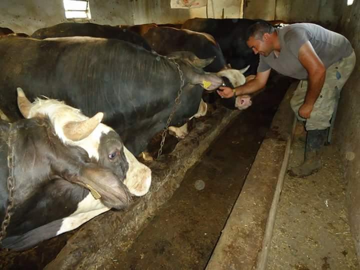 Her geçen yıl artan yem fiyatları, kuraklık tehdidi ve ekonomik krize bağlı olarak büyüyen sorunlar besicilerin belini iyice büktü. Sungurlu besiciler, hayvancılık sektöründeki kötü gidişatı anlattı. Maliyetlerin her geçen yıl daha da çoğaldığını ama kâr oranlarının da giderek azaldığını dile getiren besiciler, 2021 yılından sonra hayvancılığın ciddi düşüşe geçebileceğini belirttiler.   Sungurlu Haber